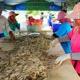 Cảnh giác trước tin đồn các nhà máy thủy sản dừng thu mua tôm
