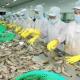 Toàn ngành nông nghiệp nỗ lực đảm bảo mục tiêu tăng trưởng phát triển của ngành