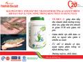 Chủ động kiểm soát thức ăn khi nuôi tôm mùa hạn mặn & nắng nóng