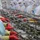 Xuất khẩu tôm đón lợi thế vượt dịch Covid- 19