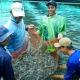 Mỹ, Trung Quốc, Nhật Bản tăng mua thủy sản Việt Nam