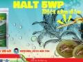 Quản lý sâu đầu đen hại dừa bằng thuốc trừ sâu sinh học Halt 5WP