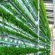 """""""Nông trại thẳng đứng"""" – Giải pháp lương thực cho thế giới trong tương lai"""