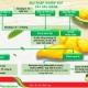 Giải pháp khiển đọt sầu riêng trước khi xổ nhụy khắc phục hiện tượng rụng bông và trái non