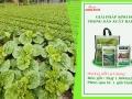 Thuốc trừ sâu sinh học Halt 5WP đặc trị sâu hại rau cải kháng thuốc và giải pháp phân bón hữu cơ sinh học Wokozim trong nông nghiệp trồng rau không lạm dụng thuốc kích thích sinh trưởng