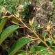 Phân bón hữu cơ sinh học Wokozim sở hữu yếu tố gì ảnh hưởng đến sự phân hóa chồi trên cây sầu riêng sau thu hoạch?