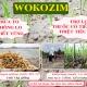 Giải pháp canh tác kiểm soát cỏ dại và giảm phân hóa học cho lúa Đông Xuân