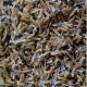 Biện pháp dinh dưỡng cho hạt lúa giống nảy mầm tốt chống chịu mưa bão
