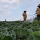 Ô nhiễm môi trường từ phân hóa học: Nông dân lạm dụng trong trồng trọt