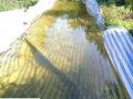 Các biện pháp quản lý hạn mặn hạn chế thiệt hại cho vườn cây ăn trái