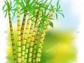 Quy trình canh tác và bón phân cho cây mía