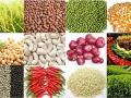 Giá nông sản và phân bón Nông Nghiệp  từ 06/08 đến 12/08/2013