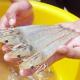 Acid hữu cơ trong thức ăn nuôi trồng thủy sản - Tiềm năng thay thế các chất kháng sinh