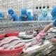 Trung Quốc hướng tới trở thành nhà nhập khẩu cá tra lớn nhất của Việt Nam