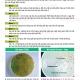 Hướng dẫn kiểm tra vi khuẩn trong môi trường nước ao nuôi bằng đĩa thạch TCBS hoặc Chrome - Agar