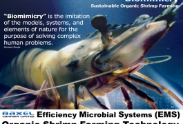 Biomimicry Shrimp Farming Thailand