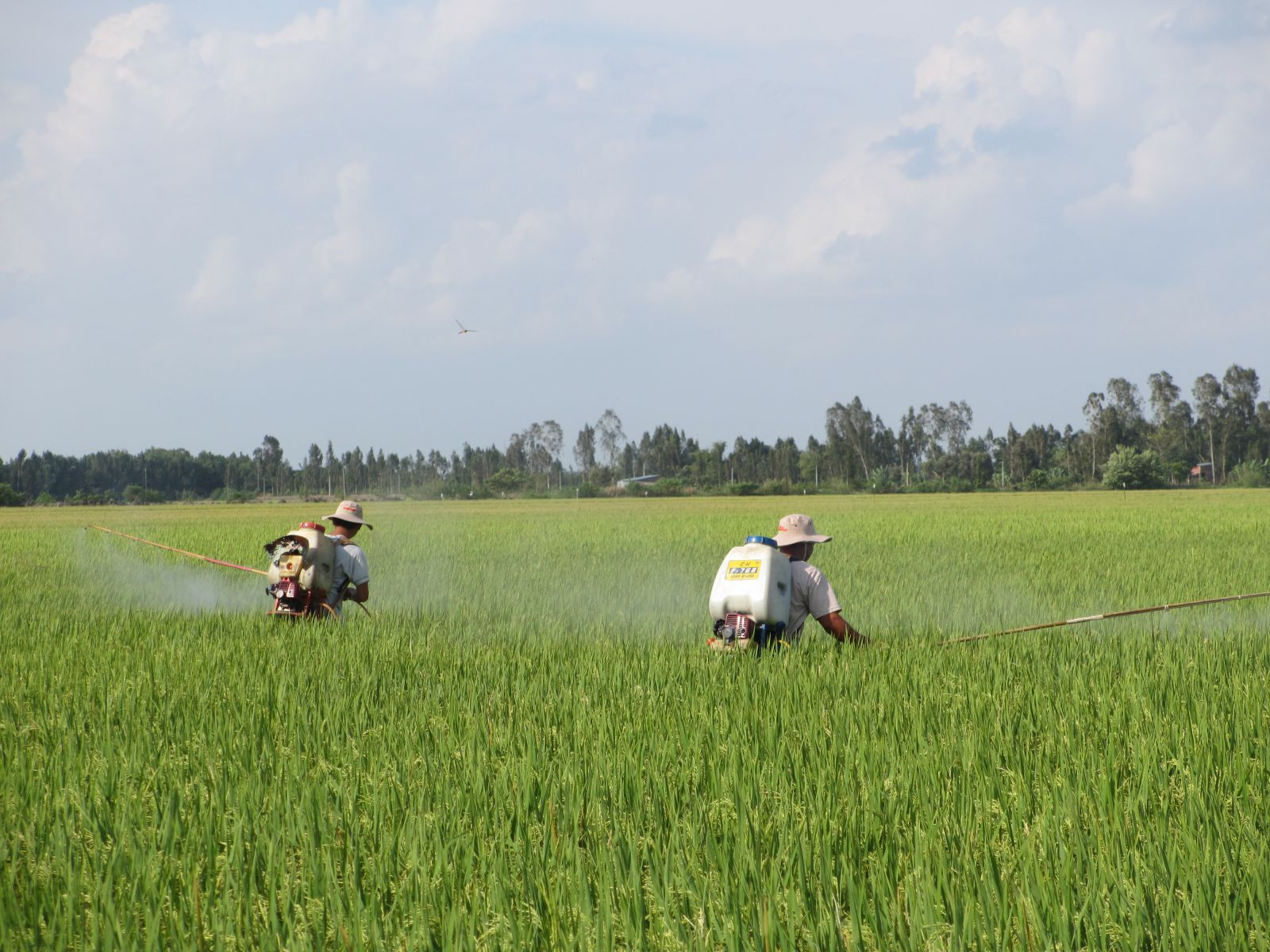 """Chiến dịch """"WOKOZIM cùng nông dân ra đồng""""  tại Tháp Mười - Đồng Tháp"""