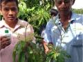 Wokozim lỏng cho Xoài giai đoạn ra hoa - đậu trái