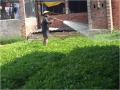Canh tác rau màu ở hợp tác xã (HTX) rau Thắng Lợi - Bà Rịa Vũng Tàu