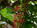 Wokozim phục hồi nhanh vườn hoa kiểng