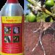 """Tricel 48EC phòng trị rệp sáp hiệu quả nhờ bộ 3 tác động """"tiếp xúc, vị độc, xông hơi cực mạnh"""""""