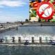 Chính phủ Chi Lê cấp giấy chứng nhận cho trại nuôi thủy sản không sử dụng kháng sinh