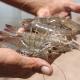 Bà Rịa Vũng Tàu: Hướng đến ứng dụng công nghệ cao vào nuôi trồng thủy sản