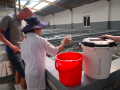 How Vinhthinh Biostadt Hatchery removes manual counting in their shrimp operations to get accurate results