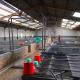 Ứng dụng vi sinh trong sản xuất tôm giống