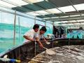 Khách hàng Vĩnh Châu – Sóc Trăng vui mừng nhận chuyển giao thành công quy trình ương tôm siêu thâm canh Raceway của Vinhthinh Biostadt