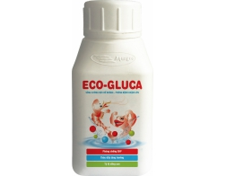 ECO-GLUCA